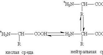 datiranje aminokiselina speed dating francuski bujica